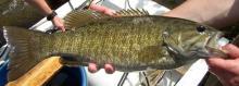 Times fish